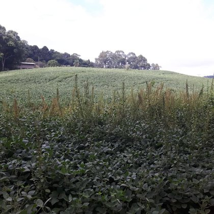Vende-se Área Rural de  11 Hectares a 3 Km da cidade de Marau